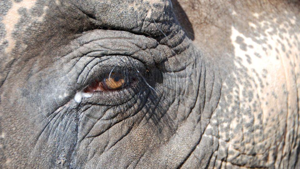 V Liberci umí vyrobit papír ze sloního trusu. Papír samozřejmě není cítit