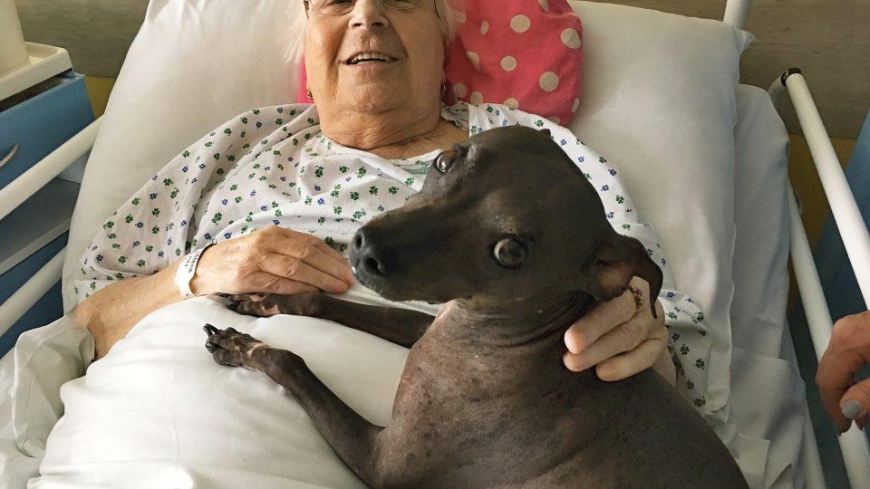 """Canisterapie v českolipské nemocnici dokáže pacientům i """"vykouzlit"""" úsměv na rtech"""