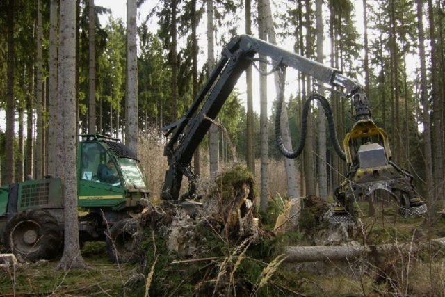 Likvidace popadaných stromů v revíru Žandov