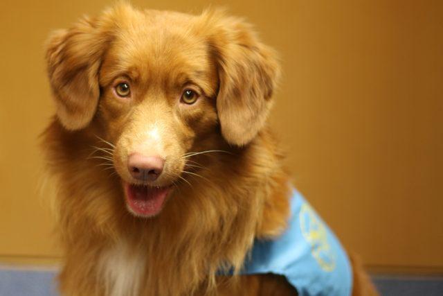 Pes, canisterapie