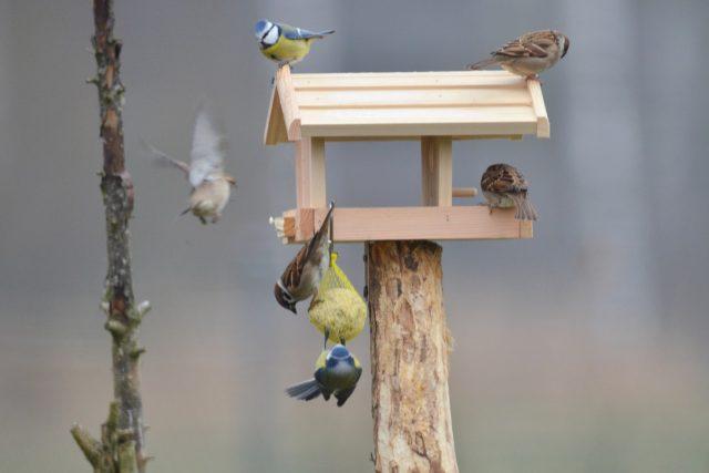 V Česku žijí různé druhy ptáků, takže rozmanitý může být i obsah krmítek: semena rostlin, plody, oříšky, sušené ovoce, ale i čerstvé.