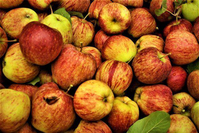Jablka odrůdy Cameo vydrží v optimálních skladovacích podmínkách do ledna | foto: Vladislava Wildová,  Český rozhlas
