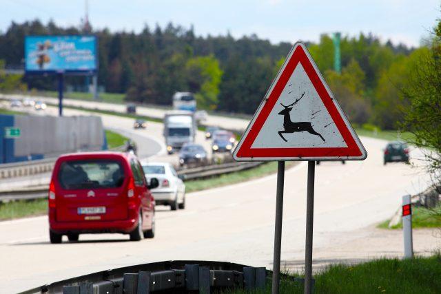 Řidiči, pozor na zvěř!