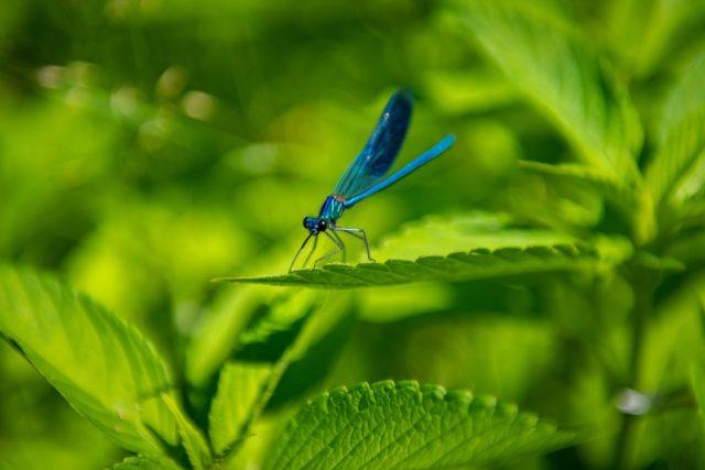 Mokřady nejen zadržují vodu v krajině, ale zvyšují také biodiverzitu okolí