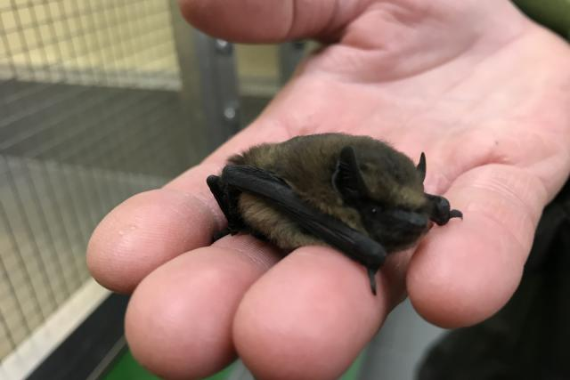 V záchranné stanici ARCHA se starají i o netopýry | foto: Lucie Fürstová,  Český rozhlas