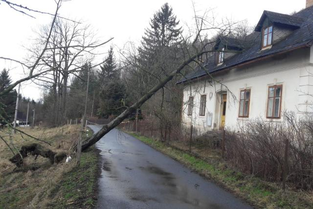 Silný vítr vyvrátil strom v osadě Peklo u Raspenavy