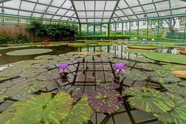 Chlouba liberecké botanické zahrady - pavilon leknínů