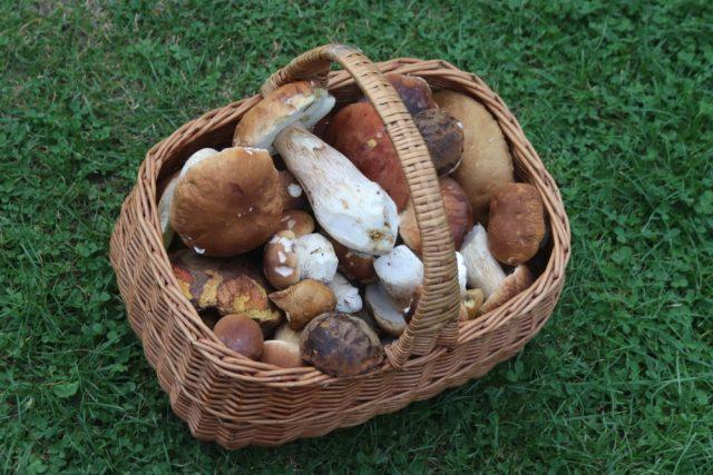 Jako amatérský mykolog Oldřich Jindřich ocení hlavně houby, které dlouho neviděl. Radost mu udělá i košík plný hříbků
