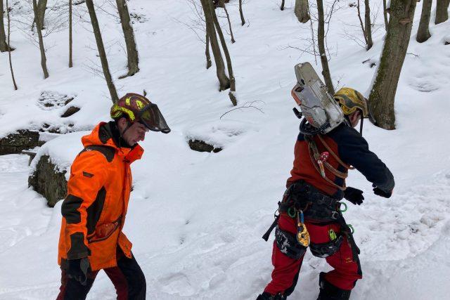 Dřevorubci začali v soutěskách řeky Kamenice u Hřenska kácet nebezpečné stromy