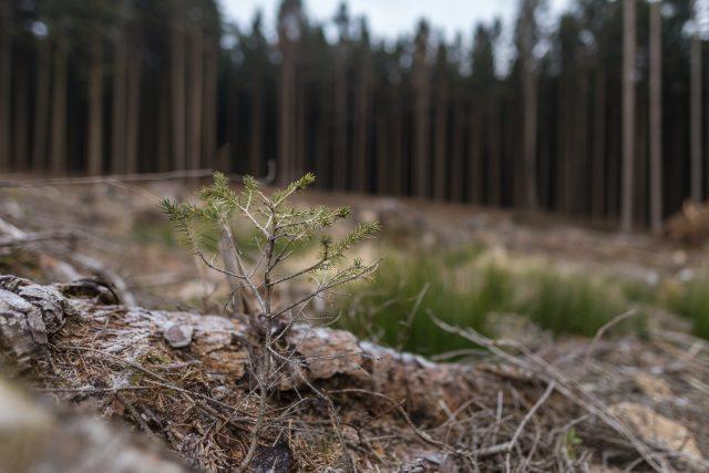 Vykácený les nedaleko Nasavrk