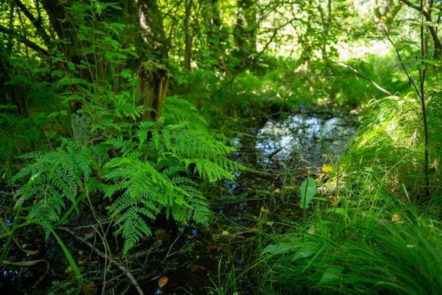 Mokřady Jablonné slouží jako přírodní učebna ekologické výchovy | foto: Vojta Herout