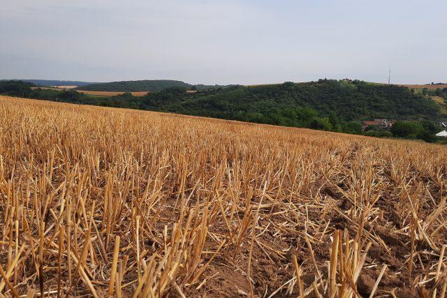 V Libereckém kraji skončila sklizeň  (ilustrační snímek)   foto: Michal Sladký,  Český rozhlas