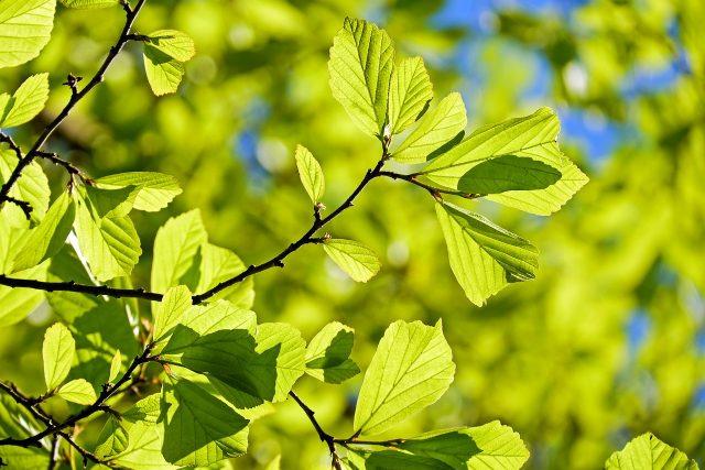 Je vám vedro? Jediný strom ochladí vzduch až o 3 stupně
