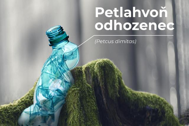 Atlas odpadkoušů: Petlahvoň odhozenec | foto: Správa Krkonošského národního parku