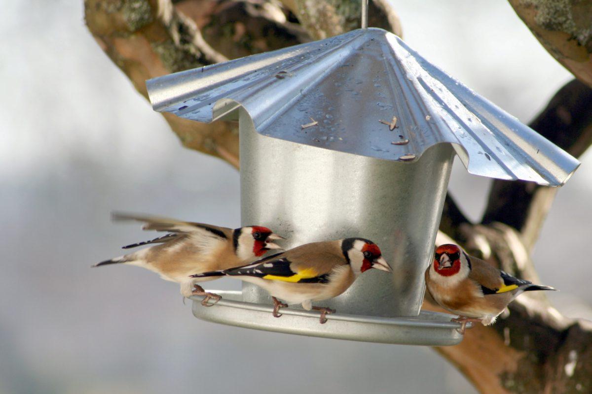 Číňané s velkými ptáky